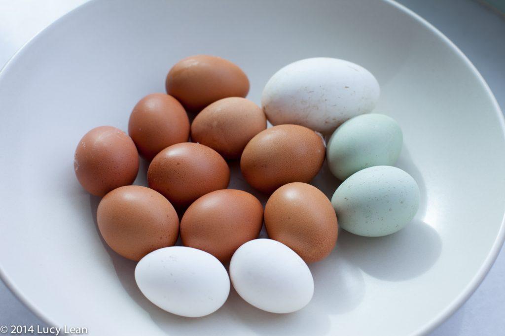 eggs - goose, bantam, hens and