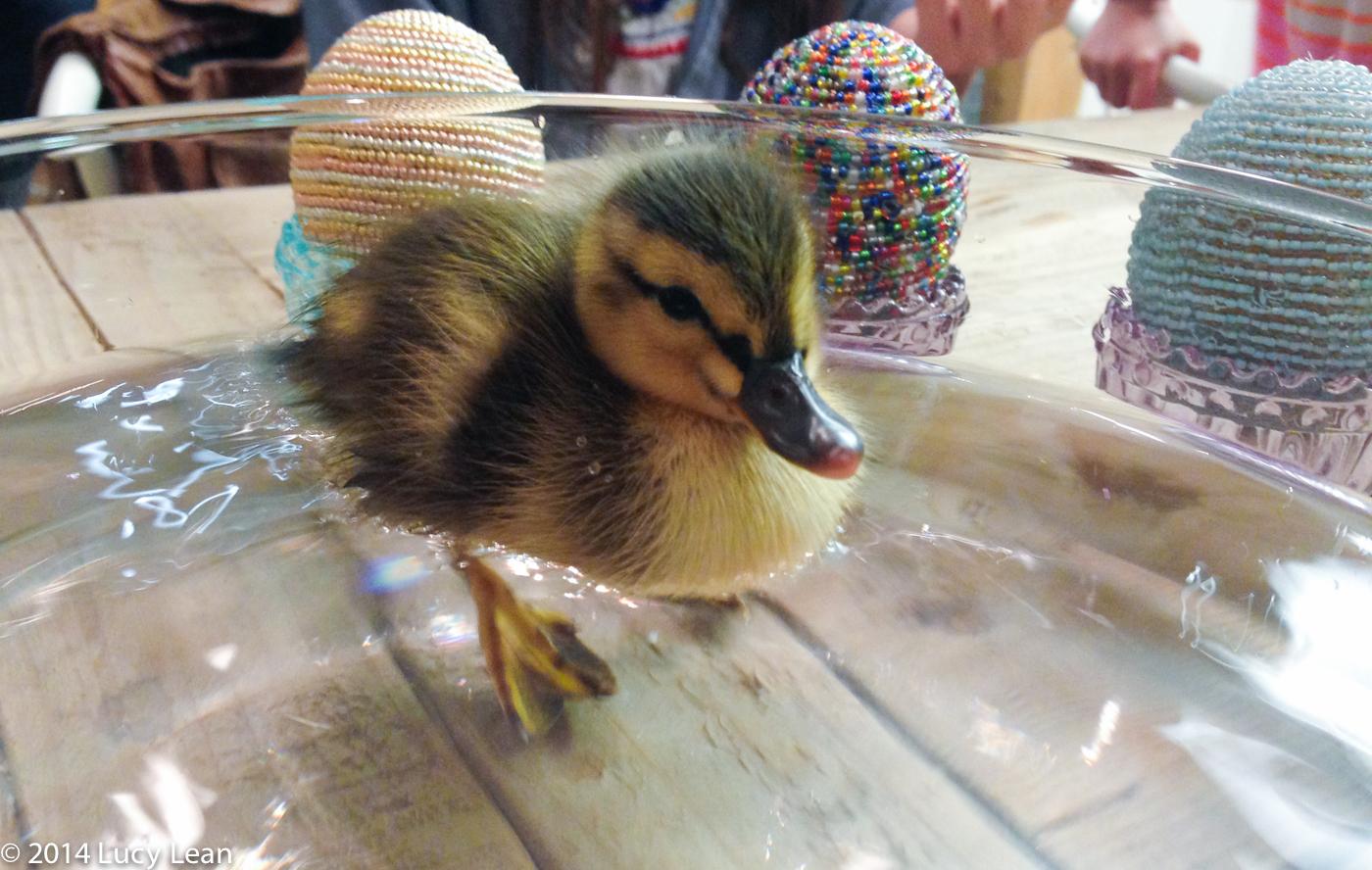 duckduckgoose (1 of 1)-11