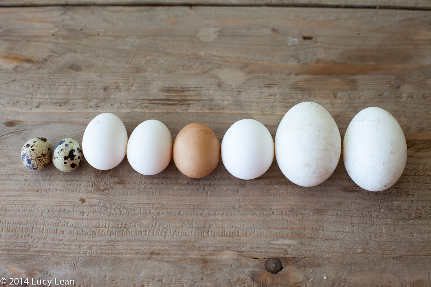 eggs of all shapes and sizes