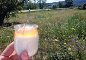 French Yogurt on picnic