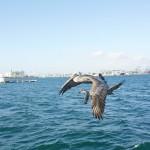 meeno-LUCY-FISHING-_H1A4256_o