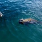 meeno-LUCY-FISHING-_H1A4327_o